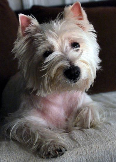 Tipps für Hundehalter